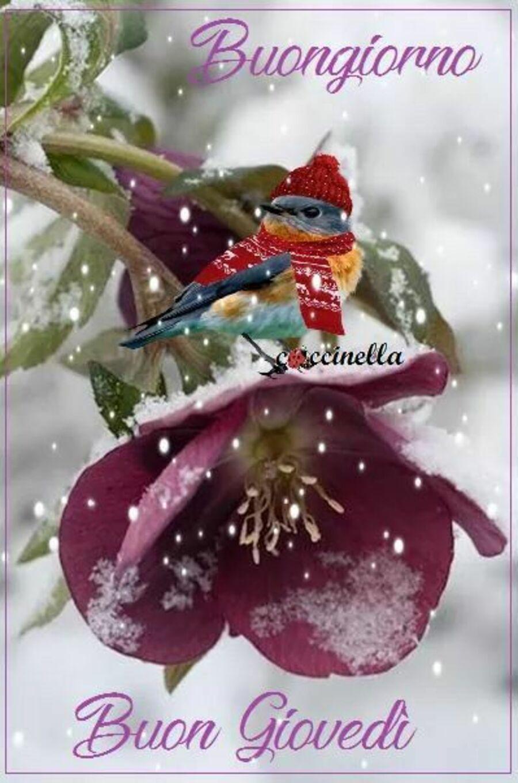 buongiorno-giovedi-invernale-14