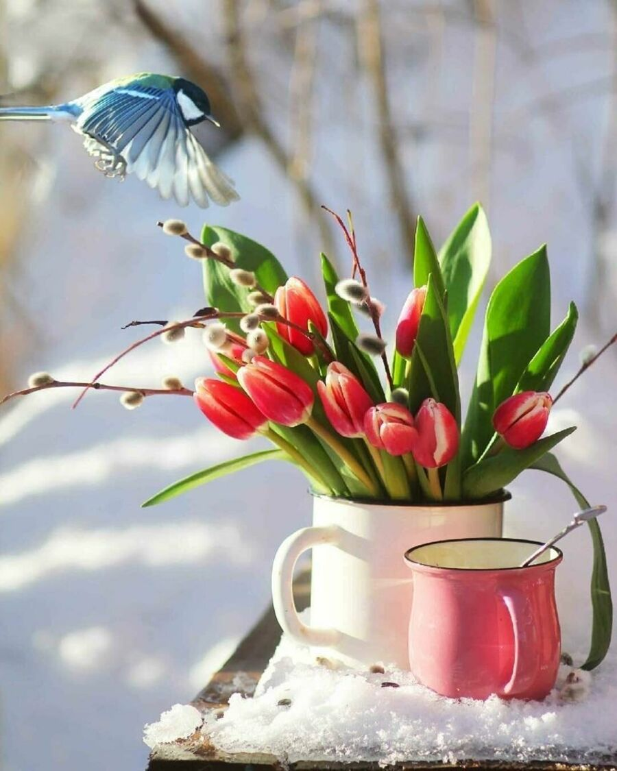 buongiorno-giovedi-invernale-17