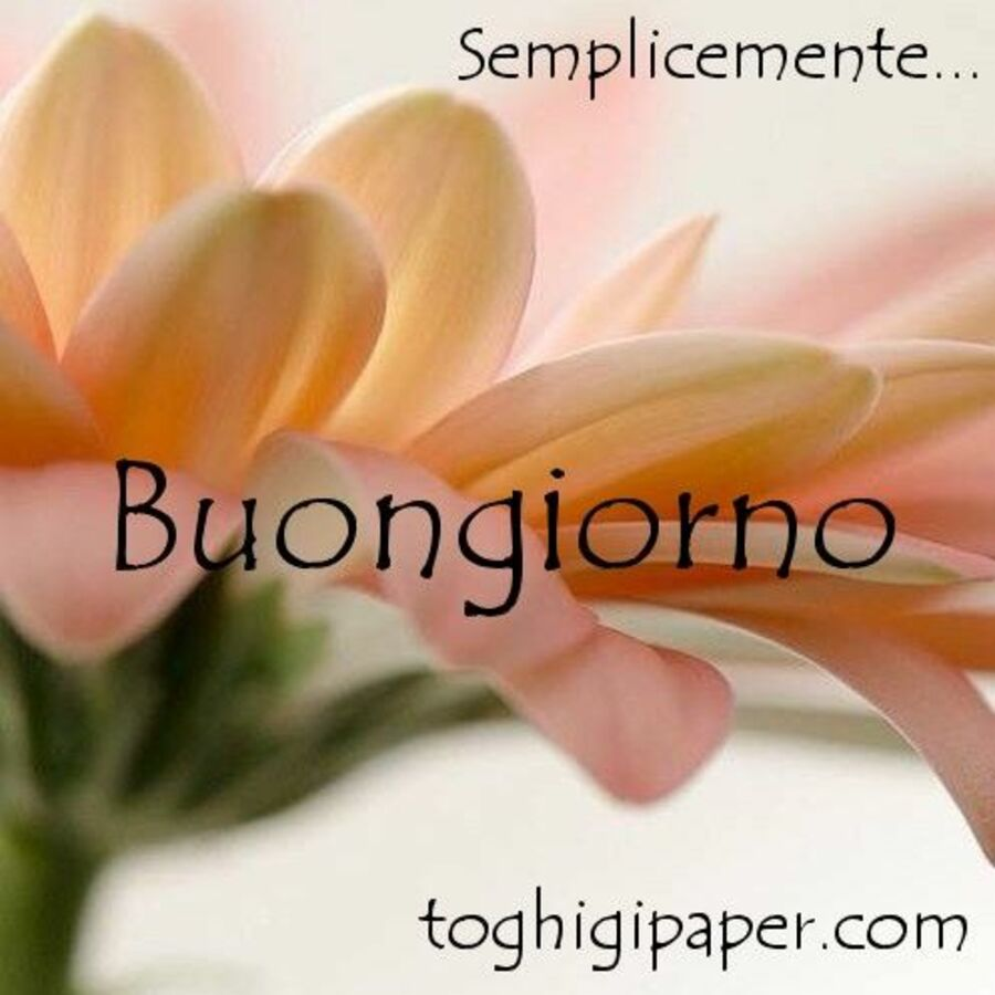 buongiorno-immagini-fiori-12